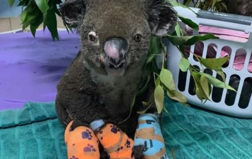 koalas moufles.jpg