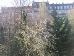arbre_1.JPG